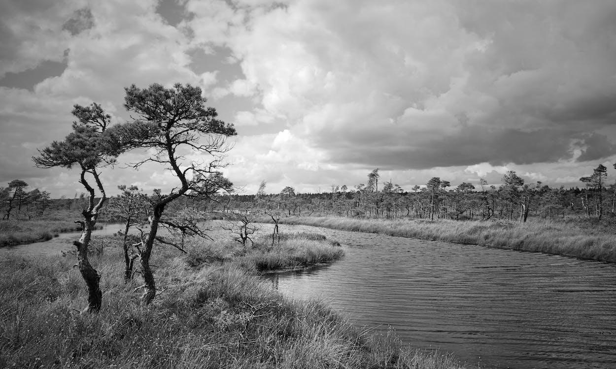 hitam dan putih, lahan basah, lansekap