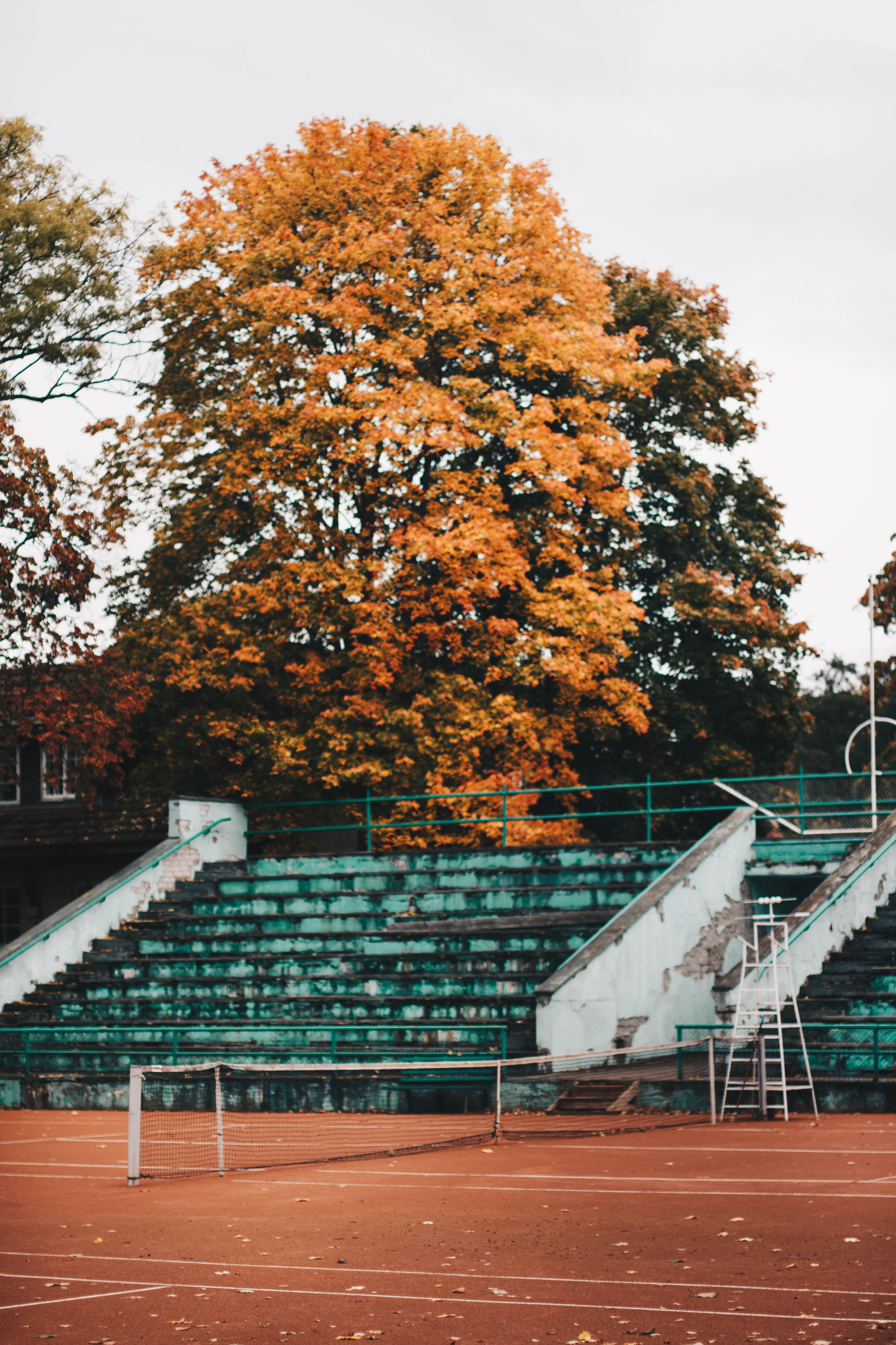 Empty Green and White Concrete Bleachers Near Brown Leaf Tree at Daytime