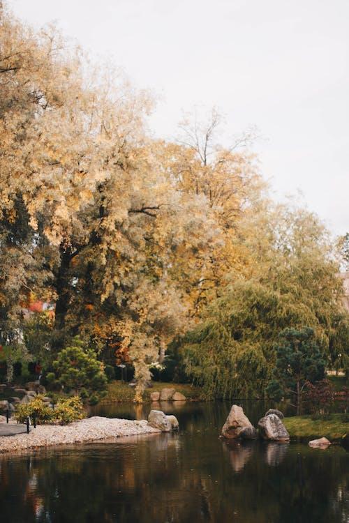 Ingyenes stockfotó ég, fák, fényvisszaverődés, festői témában