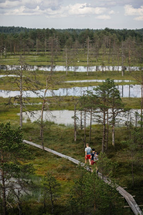 Drone view of unrecognizable men walking over terrain covered with free standing trees and small ponds on cloudy day