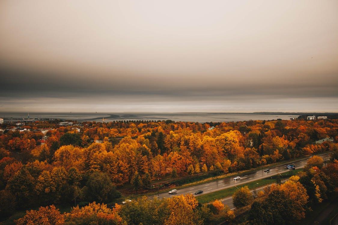 Aerial View of Orange Trees