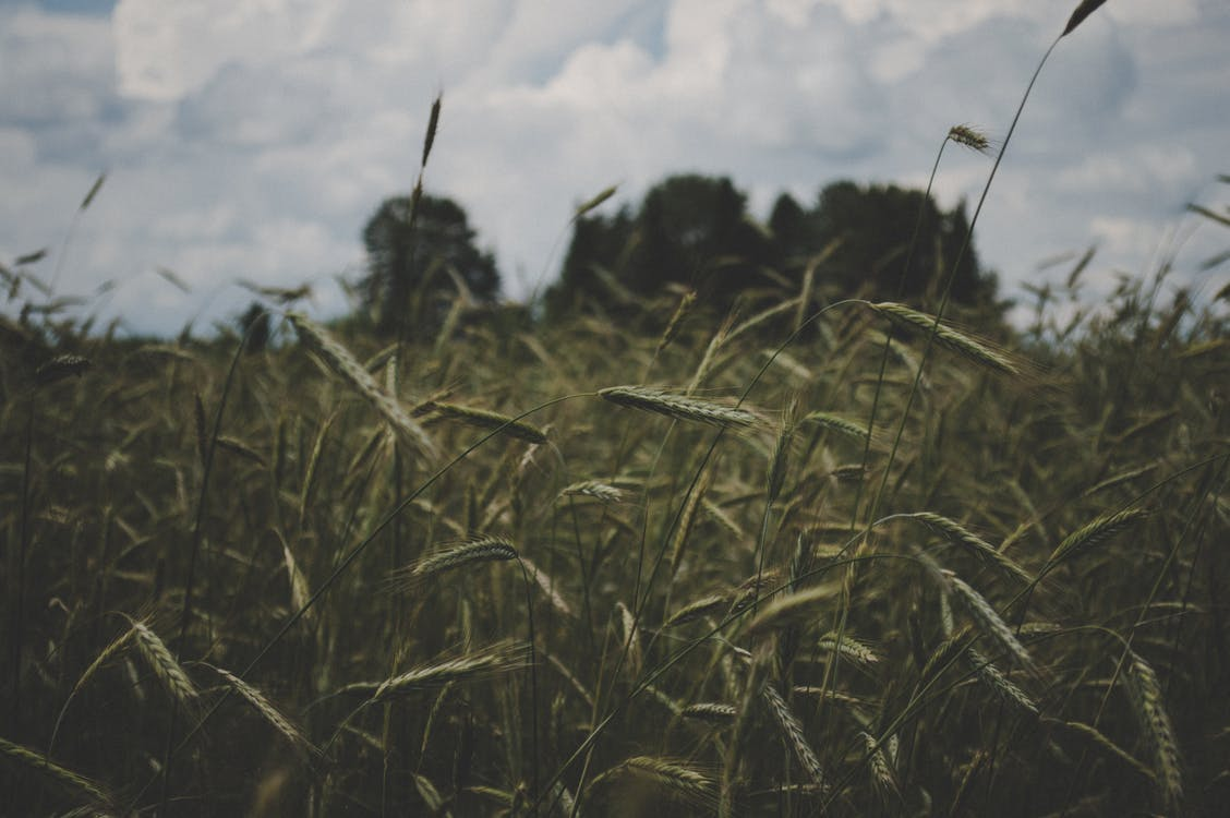 açık hava, alan, arazi