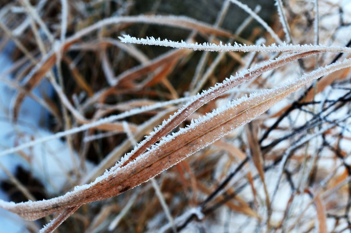 Free stock photo of cold, frozen, nature