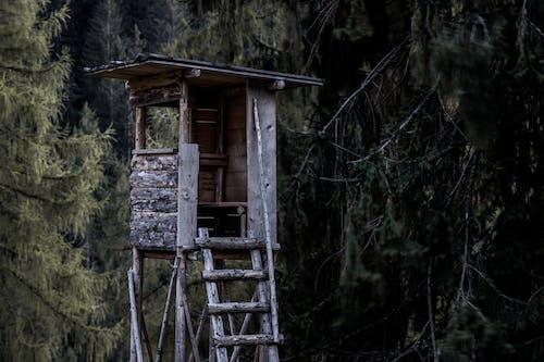 Foto stok gratis diabaikan, dinding, eksterior, hinggap