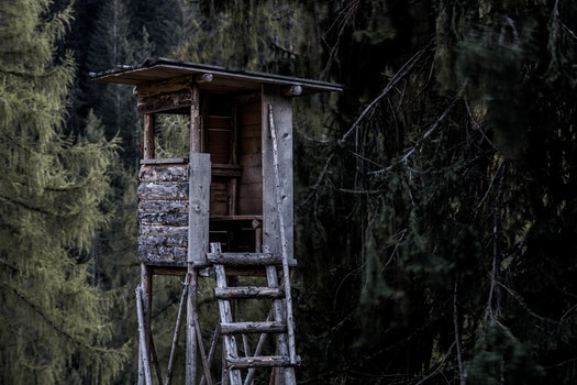 Kostenloses Stock Foto zu holz, landschaft, wald, mauer