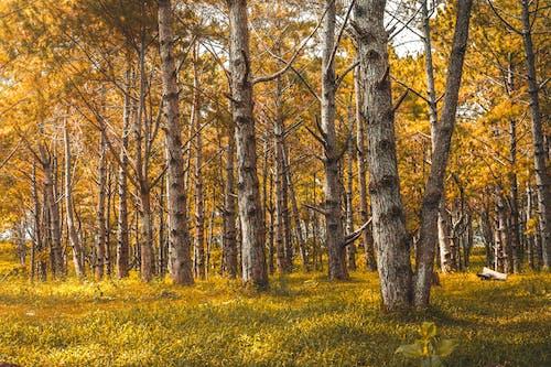 Photos gratuites de aboiement, après-midi, arbres