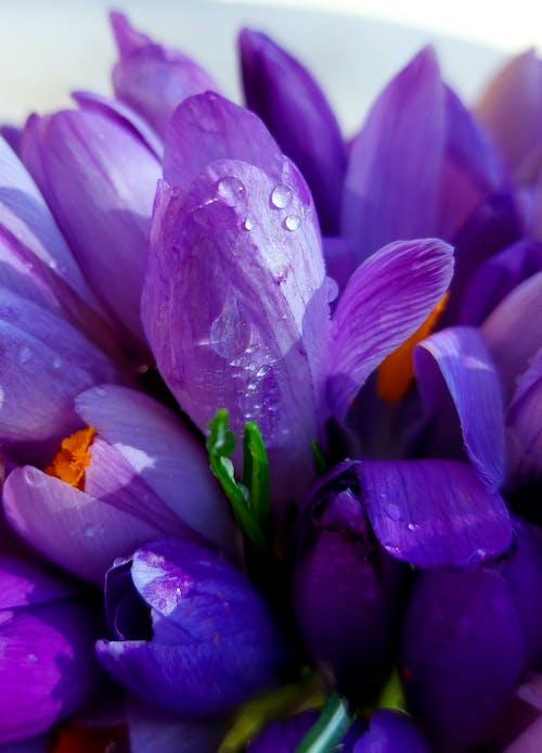 Purple Flower With Yellow Stigma