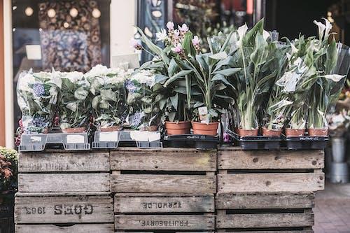Fotobanka sbezplatnými fotkami na tému črepníkové rastliny, črepníky, drevené prepravky, flóra