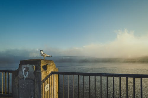 Free stock photo of beach, bird, bridge
