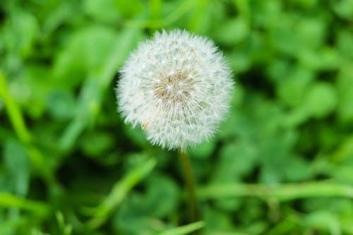 Photos gratuites de centrale, croissance, environnement, fleur