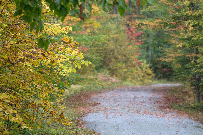 Free stock photo of autumn, fall, foliage