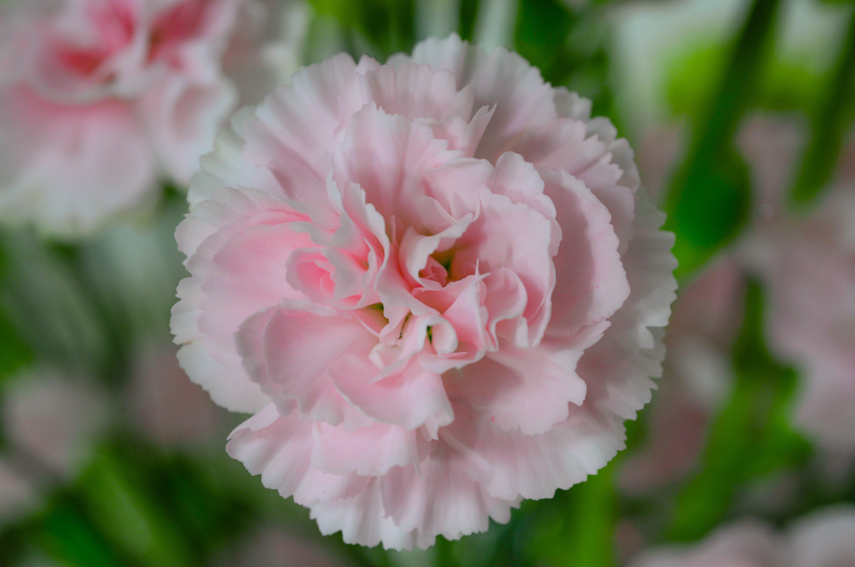 Foto profissional grátis de aumento, broto, close, flor