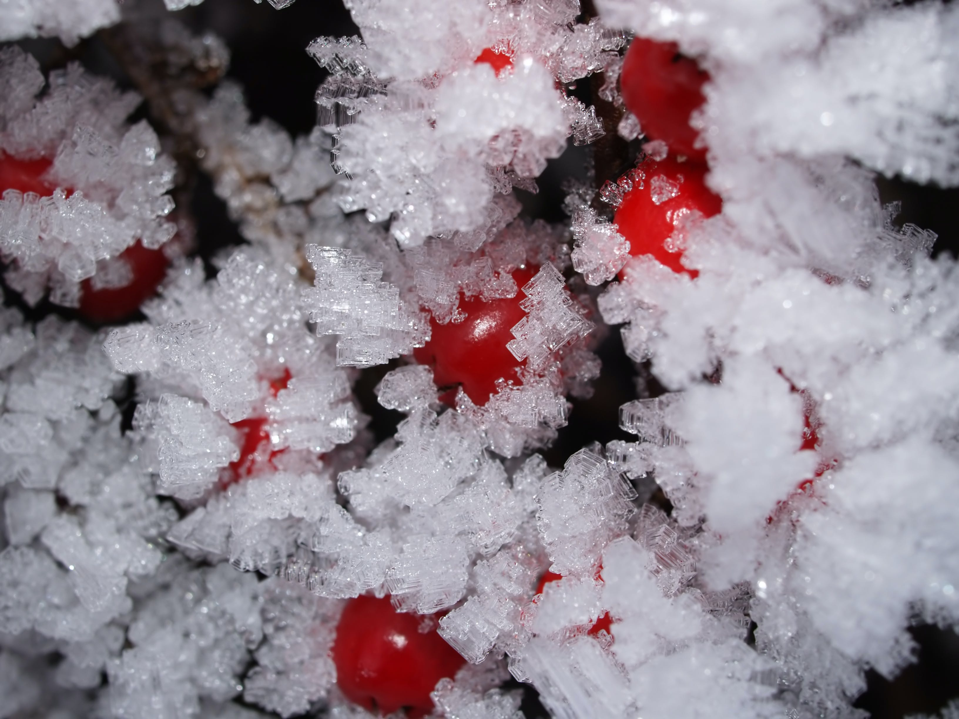 Frosted Fruits