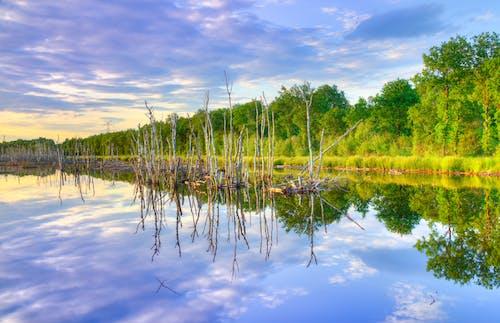 Gratis lagerfoto af dagslys, græs, himmel, malerisk