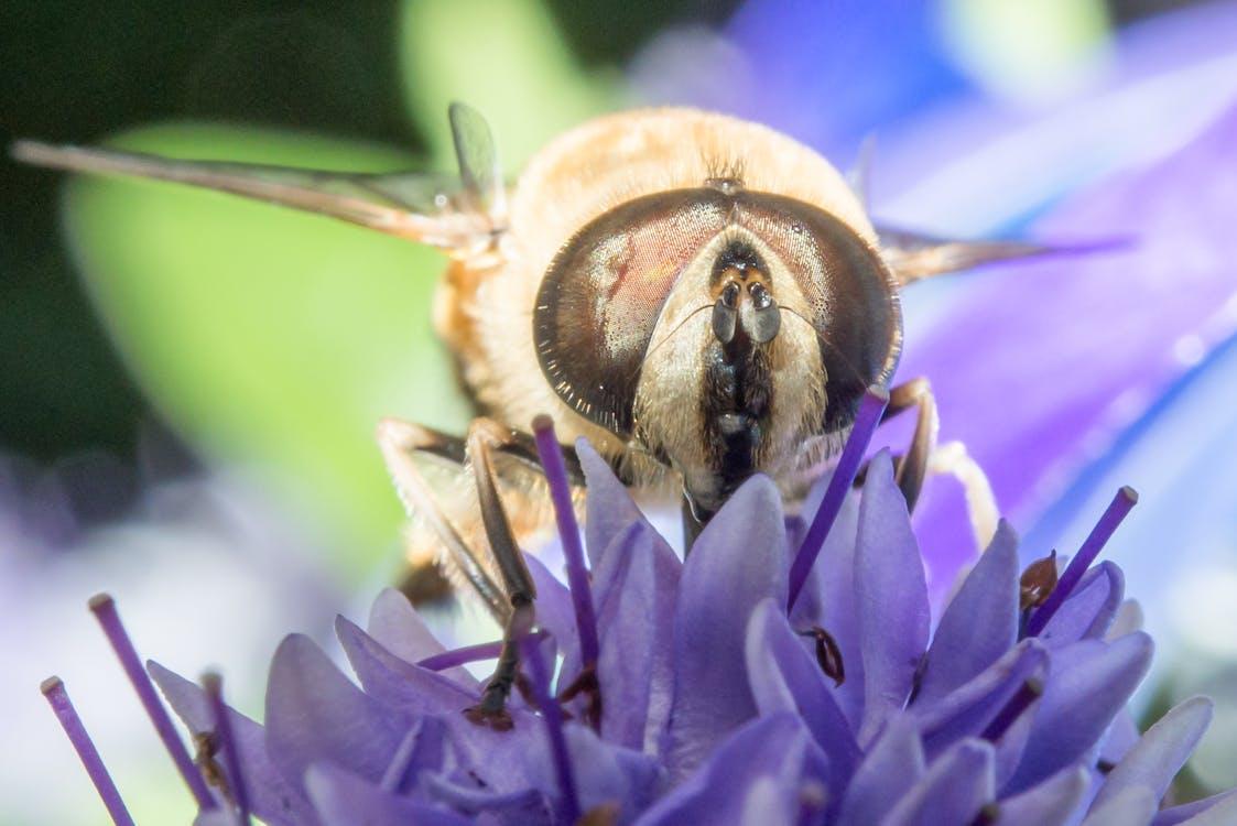 Free stock photo of animal, bee, eye