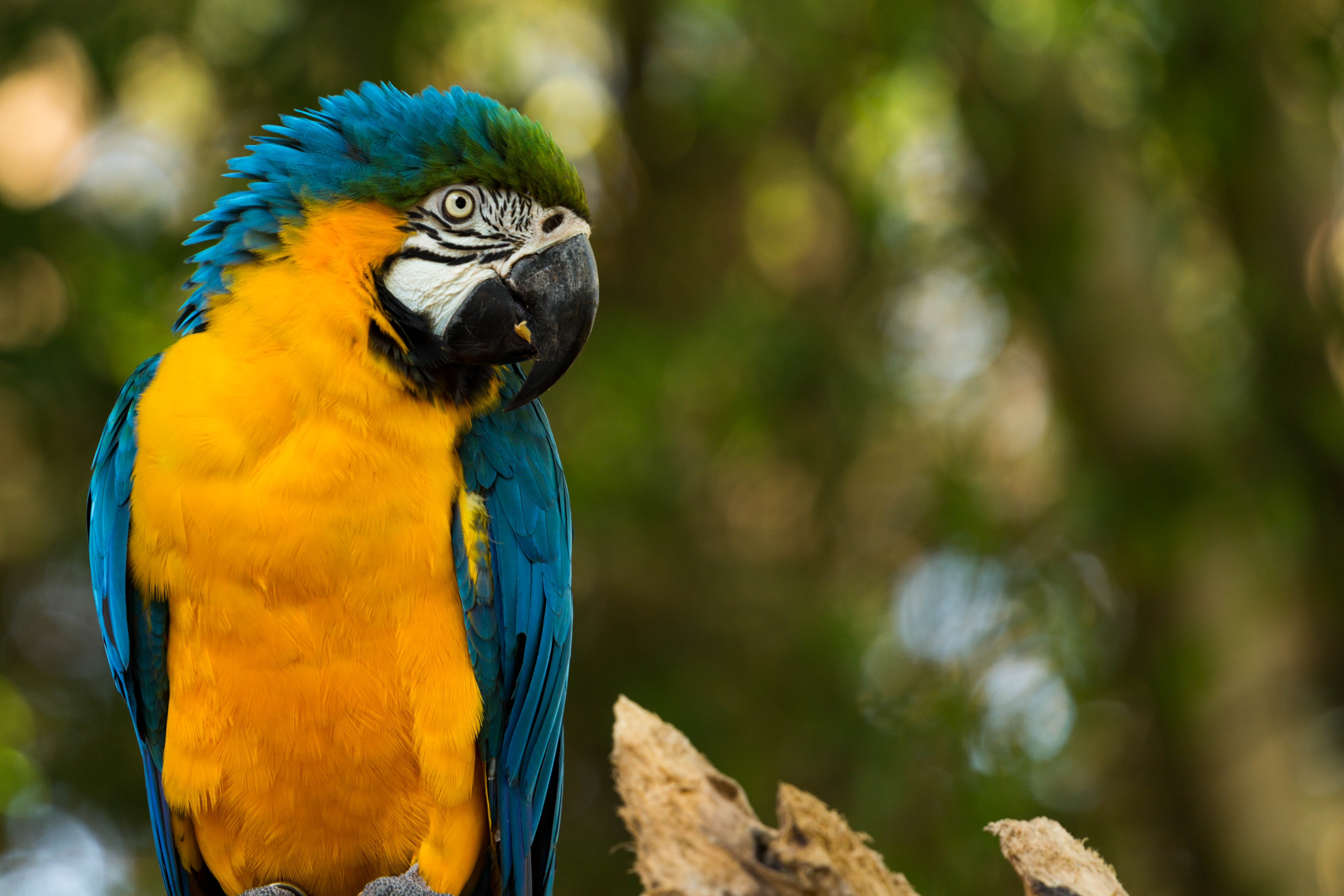 Selective-focus Photography of Blue Macaw