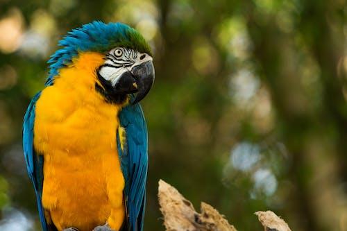 Immagine gratuita di zoo parque itatiba - sp - brasile