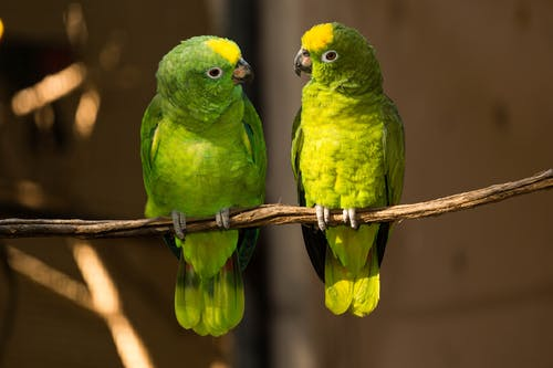 Two Green Birds on Branch