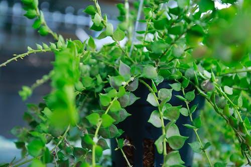 Бесплатное стоковое фото с милое растение