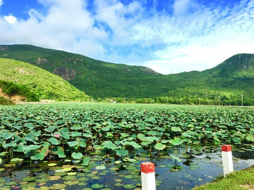 Gratis arkivbilde med lotus, lotus innsjø