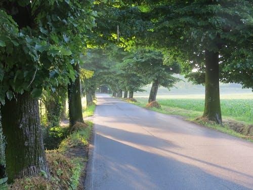 Immagine gratuita di italia, piccola strada