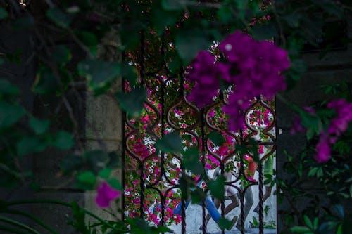 Free stock photo of art, building, door