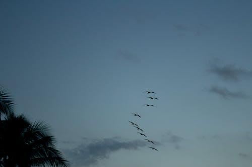 Free stock photo of art, beautiful sky, palm beach