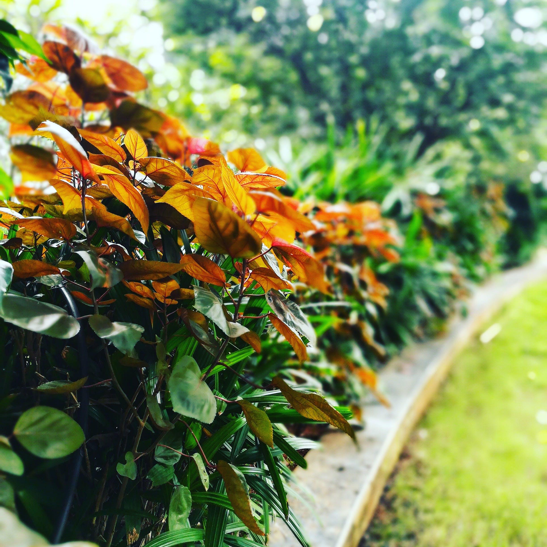Free stock photo of autumn colours, colourful, Colourful leaves