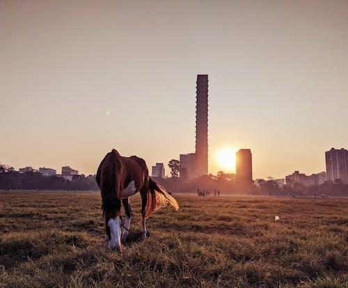 Бесплатное стоковое фото с восход, город фон, животное