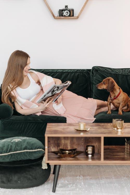 bakmak, daksund, dergi içeren Ücretsiz stok fotoğraf