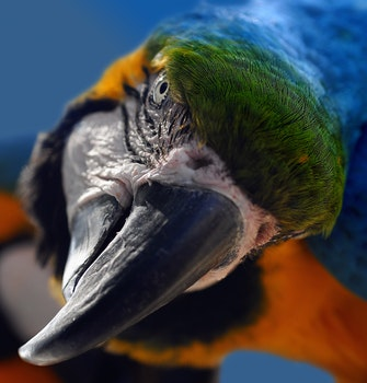 Green Orange and Black Parrot in a Selective Photography
