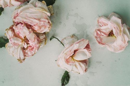 Immagine gratuita di bellissimo, colori, fiori, flora