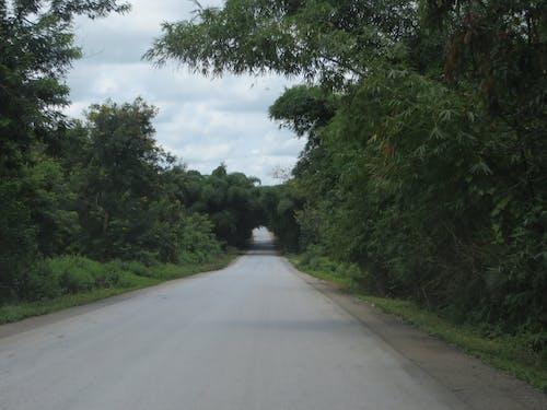 Immagine gratuita di repubblica democratica del congo, tunnel, tunnel degli alberi