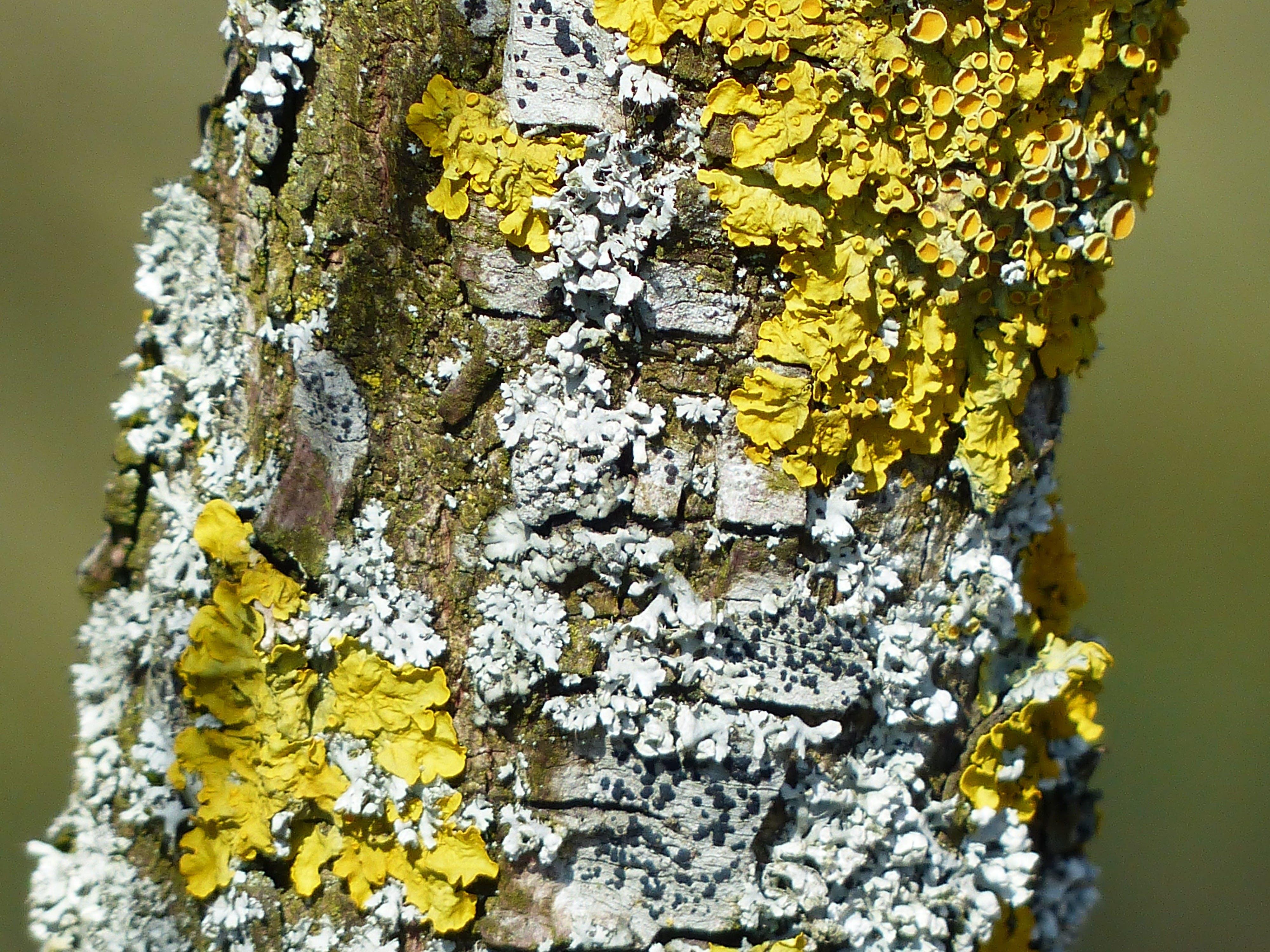 Free stock photo of road, yellow, tree, mushroom