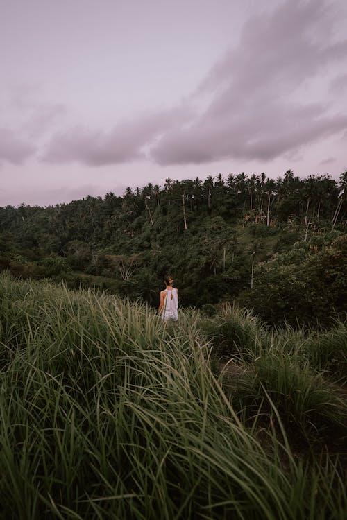 Foto stok gratis alam, alami, anonim