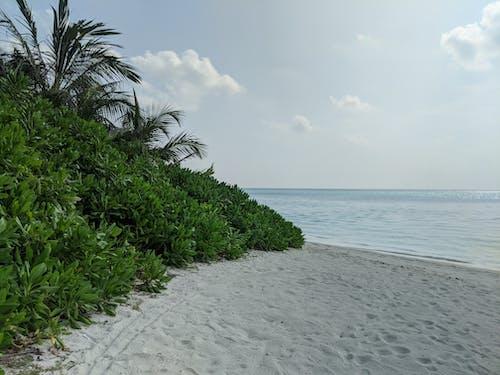 Green Trees on White Sand Beach