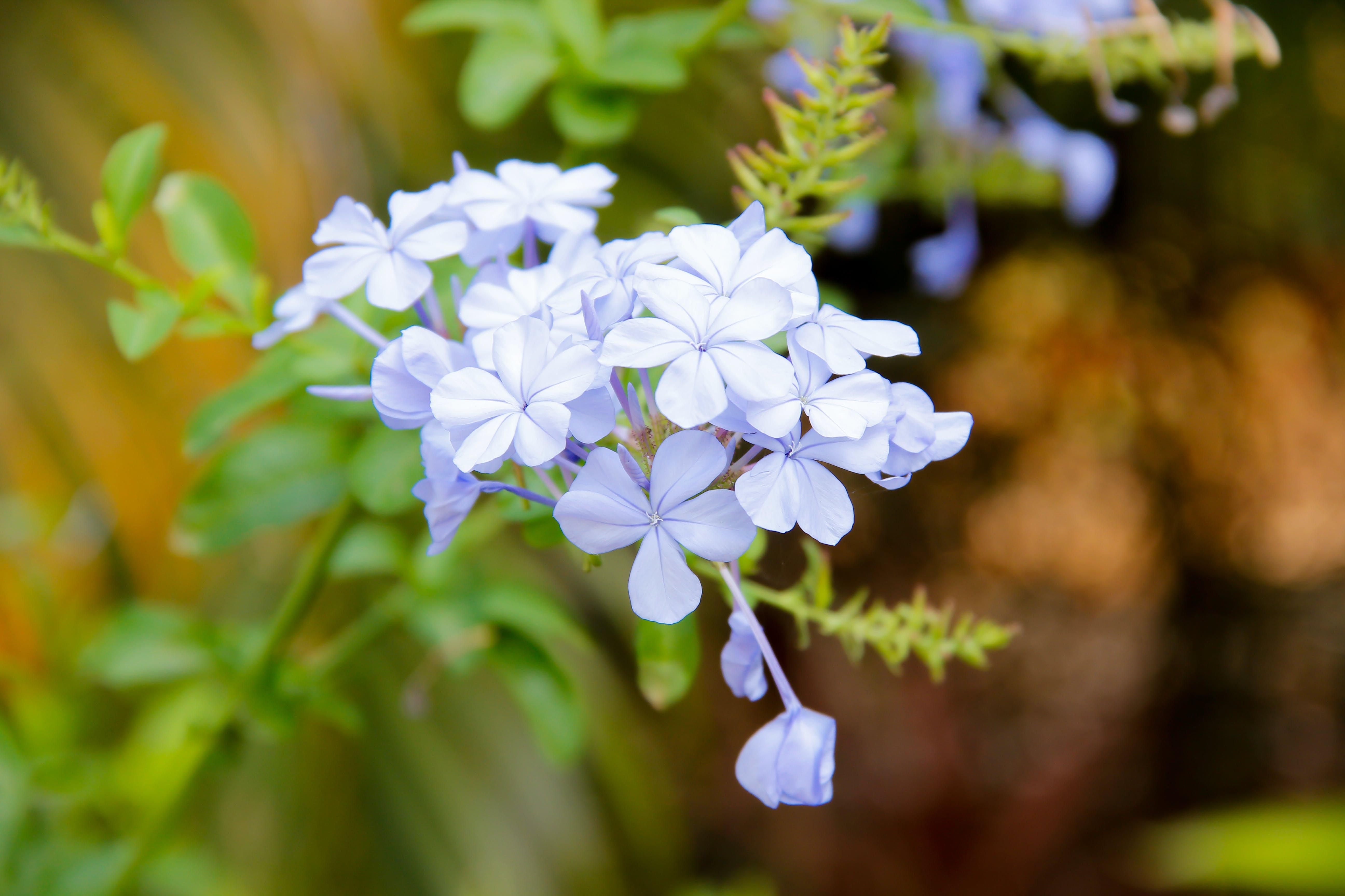 Základová fotografie zdarma na téma květinová zahrada, kytice, kytka, řezané květiny