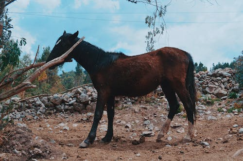 Free stock photo of brown horse, horse, horse head