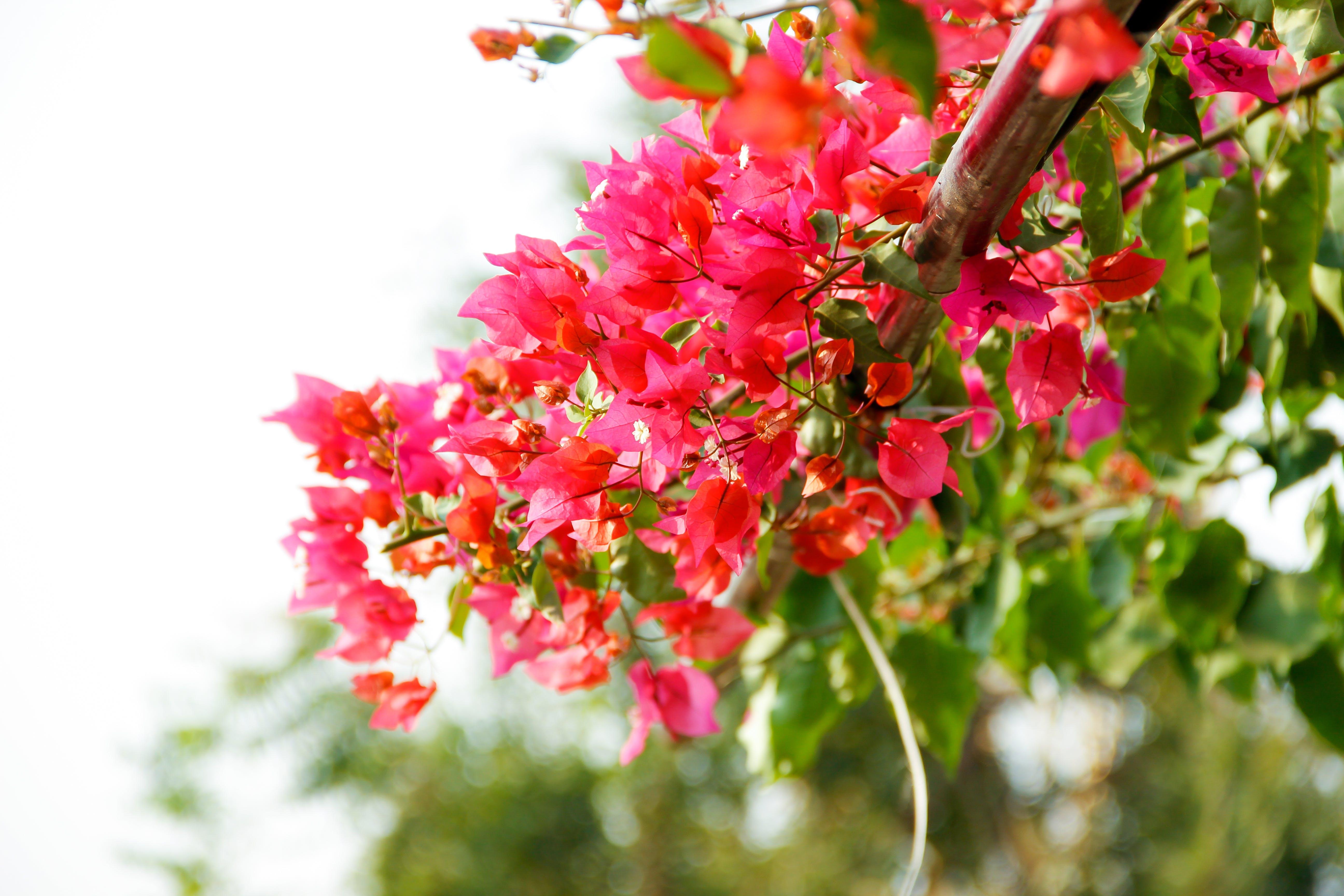 Základová fotografie zdarma na téma krásné květiny, květinová zahrada, kytice, kytka