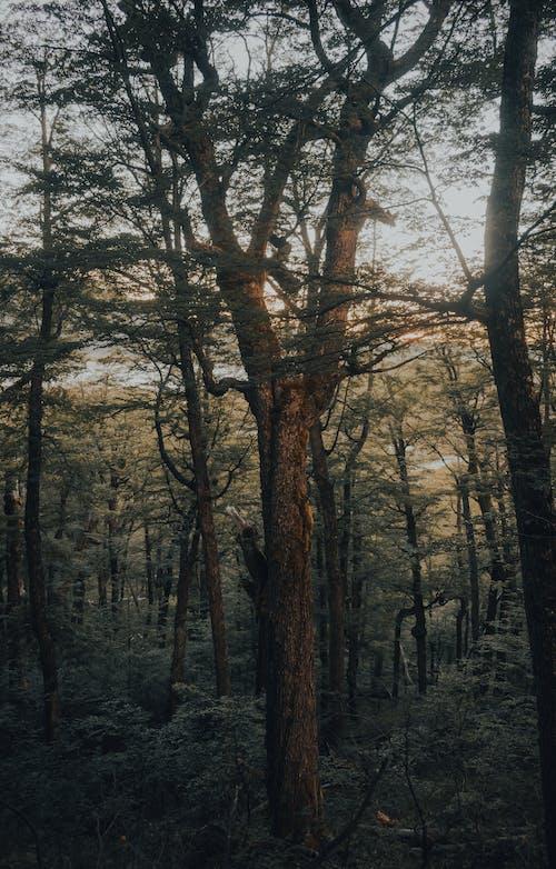 Безкоштовне стокове фото на тему «вказівки, Деревина, дерево»