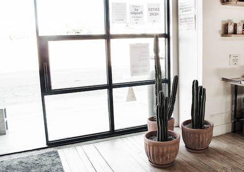 仙人掌, 室內, 工厂 的 免费素材图片