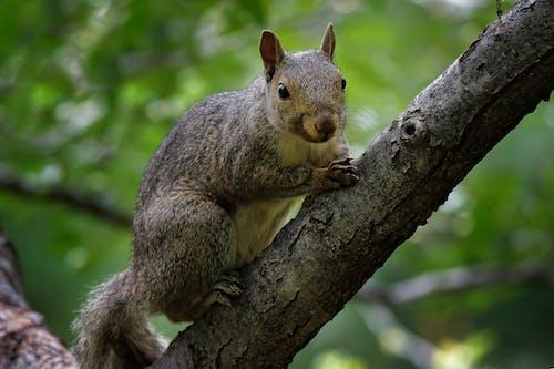 Gratis lagerfoto af dyr, dyreliv, egern