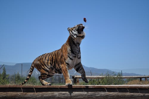 Free stock photo of africa, animal, animals