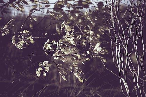 Безкоштовне стокове фото на тему «вітряний, гілки, грозовий»