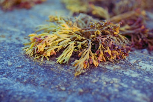 Free stock photo of brown, ocean shore, orange, rock