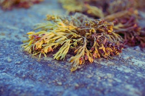 Безкоштовне стокове фото на тему «апельсин, берег океану, камінь, коричневий»