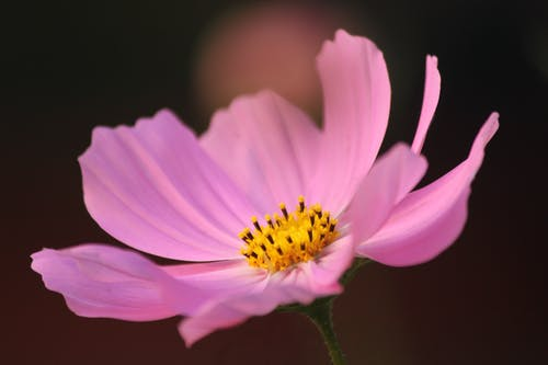 Close-Up Shot of a Purple Flower in Bloom