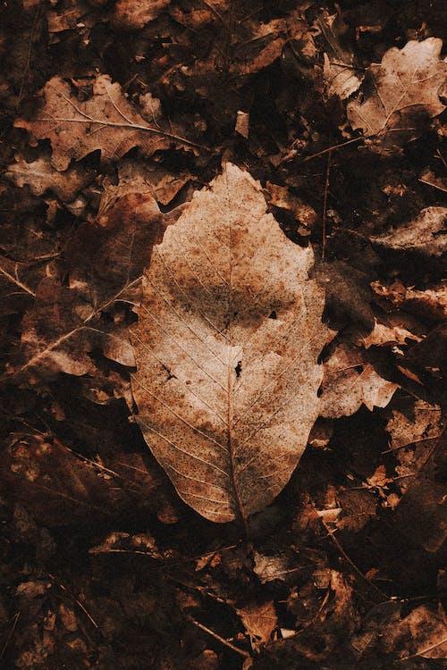 Foto profissional grátis de arvoredo, botânica, botânico
