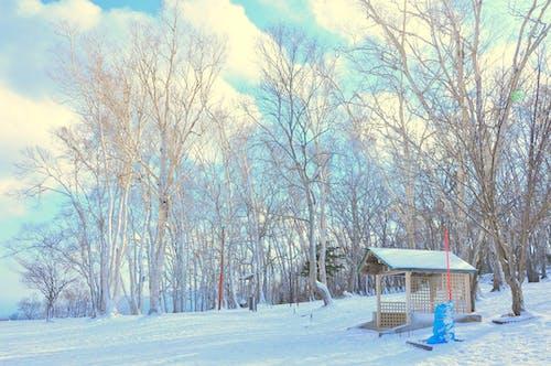 Бесплатное стоковое фото с белый, ветви, ветвь, дерево