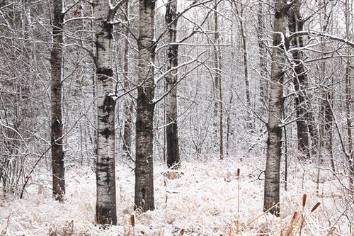Free stock photo of black, bush, cold, forrest